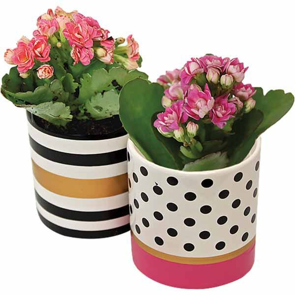 valentine's day gifts - kalanchoe