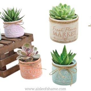 aldi mason jar succulents