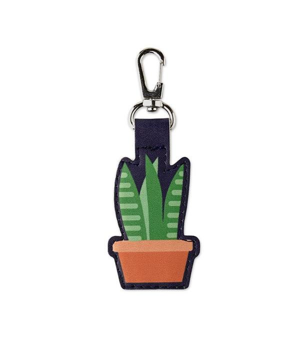 succulent quarter keeper aldi