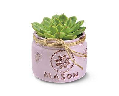 mason jar succulents at Aldi