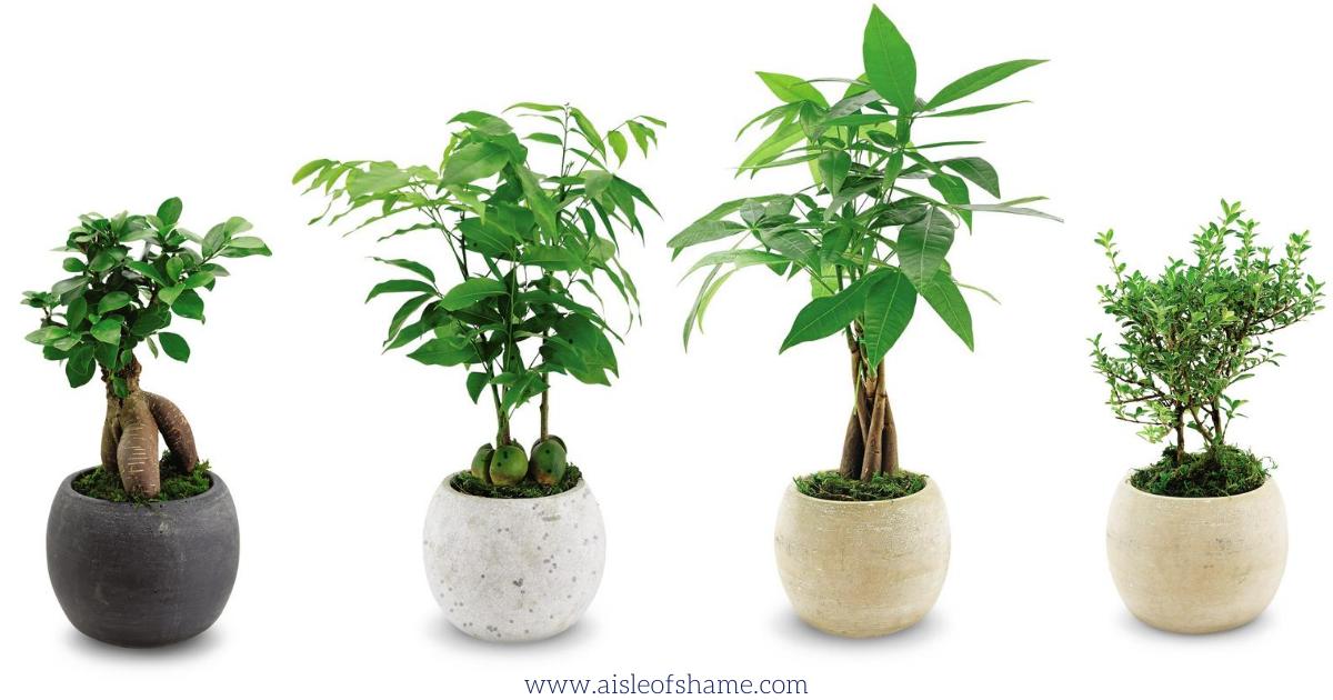 September Plant Babies