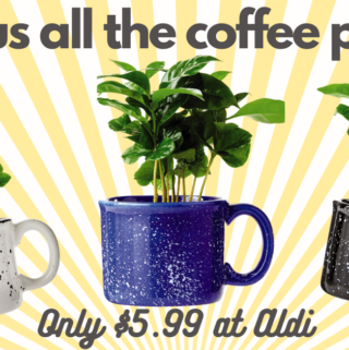 Coffee Plants at aldi in mug