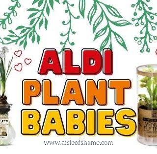 october plant babies at Aldi