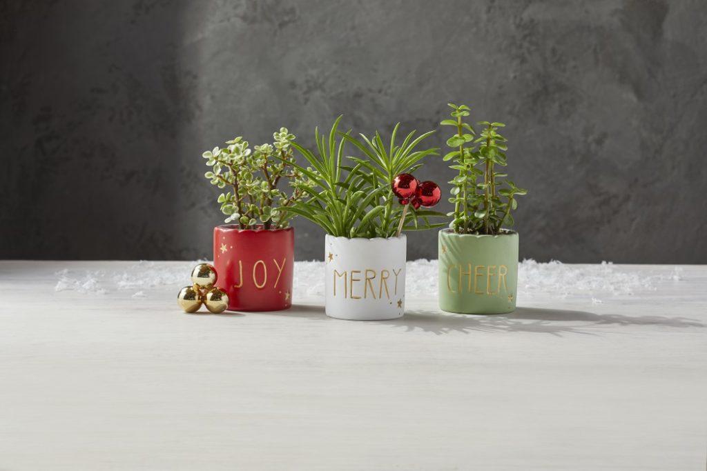 mini holiday succulent