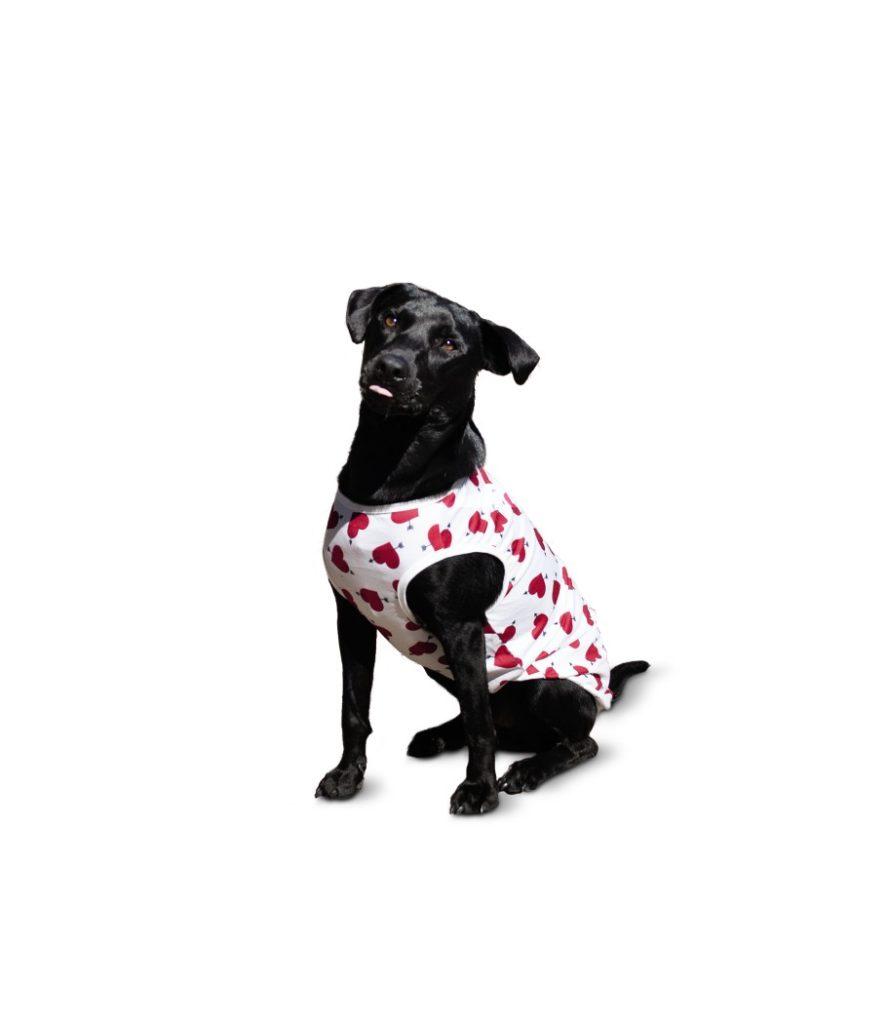 aldi valentine dog outfit