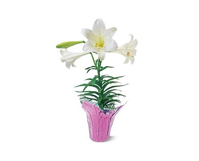 easter lilies at aldi