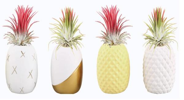 aldi summer air plant in pineapple jar