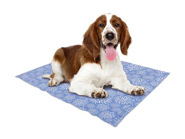 aldi pet cooling mat with dog