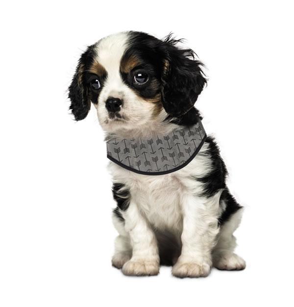 aldi pet cooling bandana