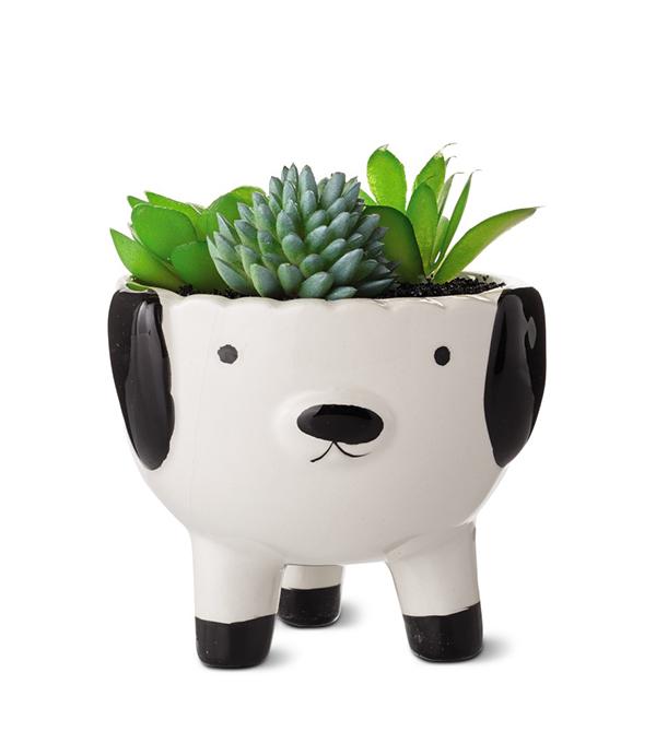 Huntington Home Mini Decorative Succulents dog